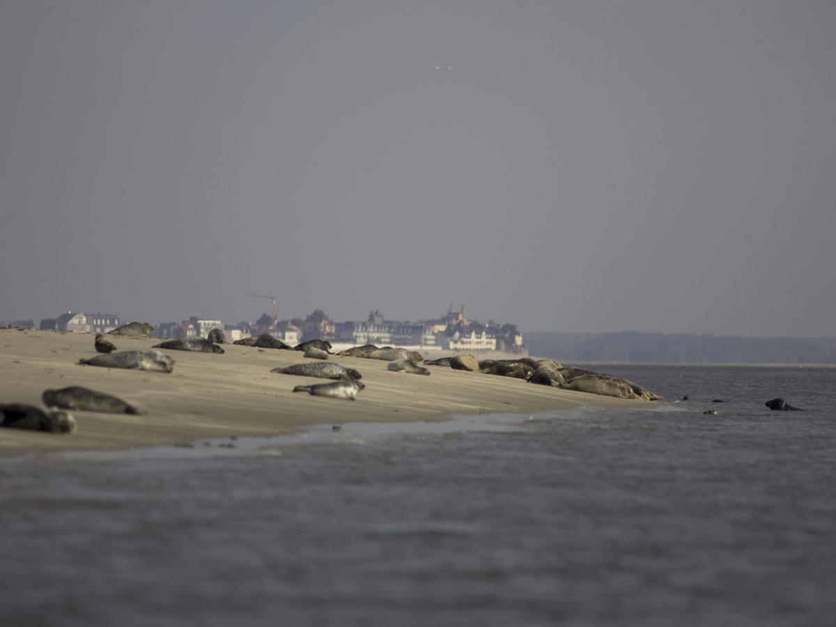 colonie de phoques en baie