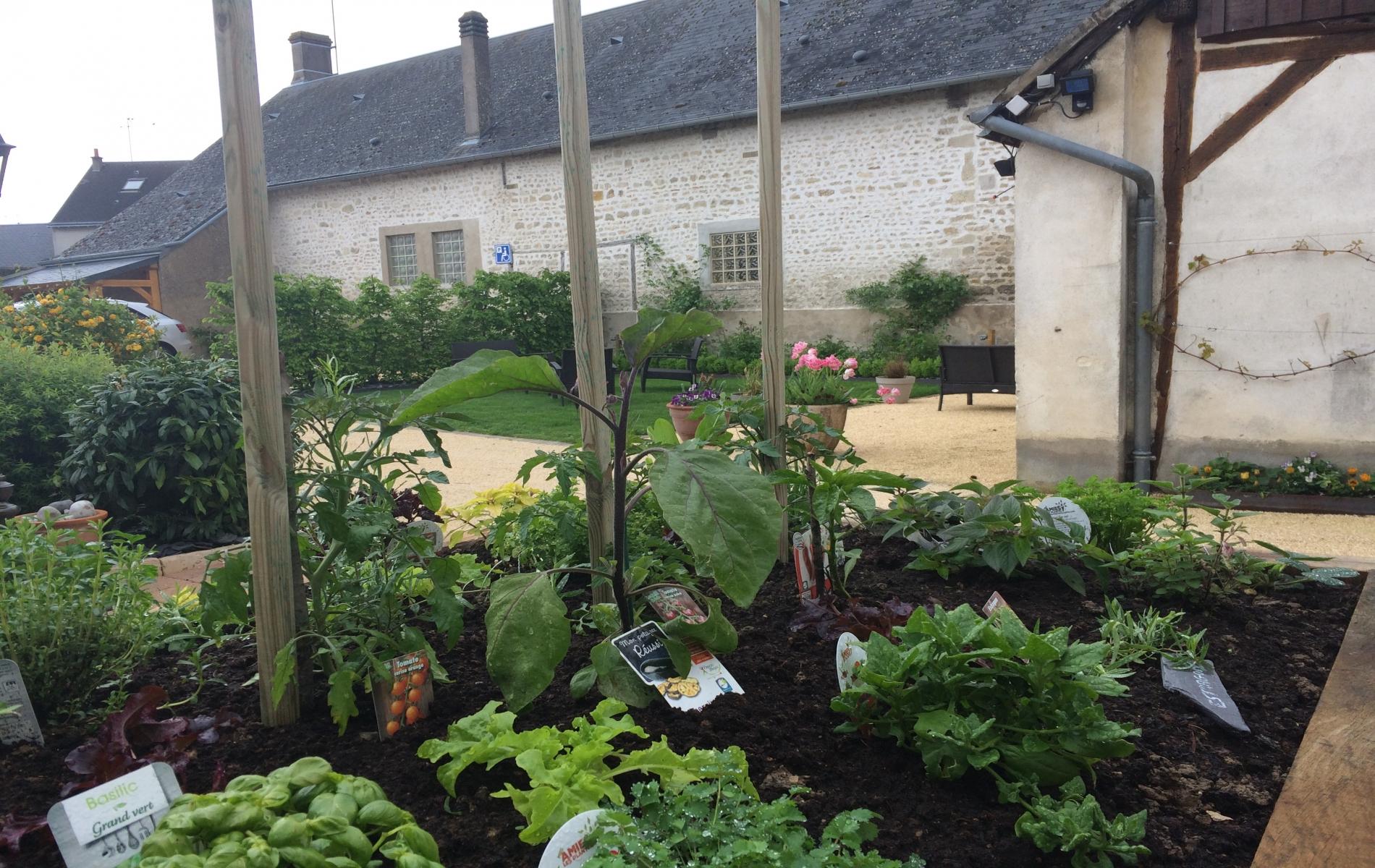 carré d'herbes du jardin