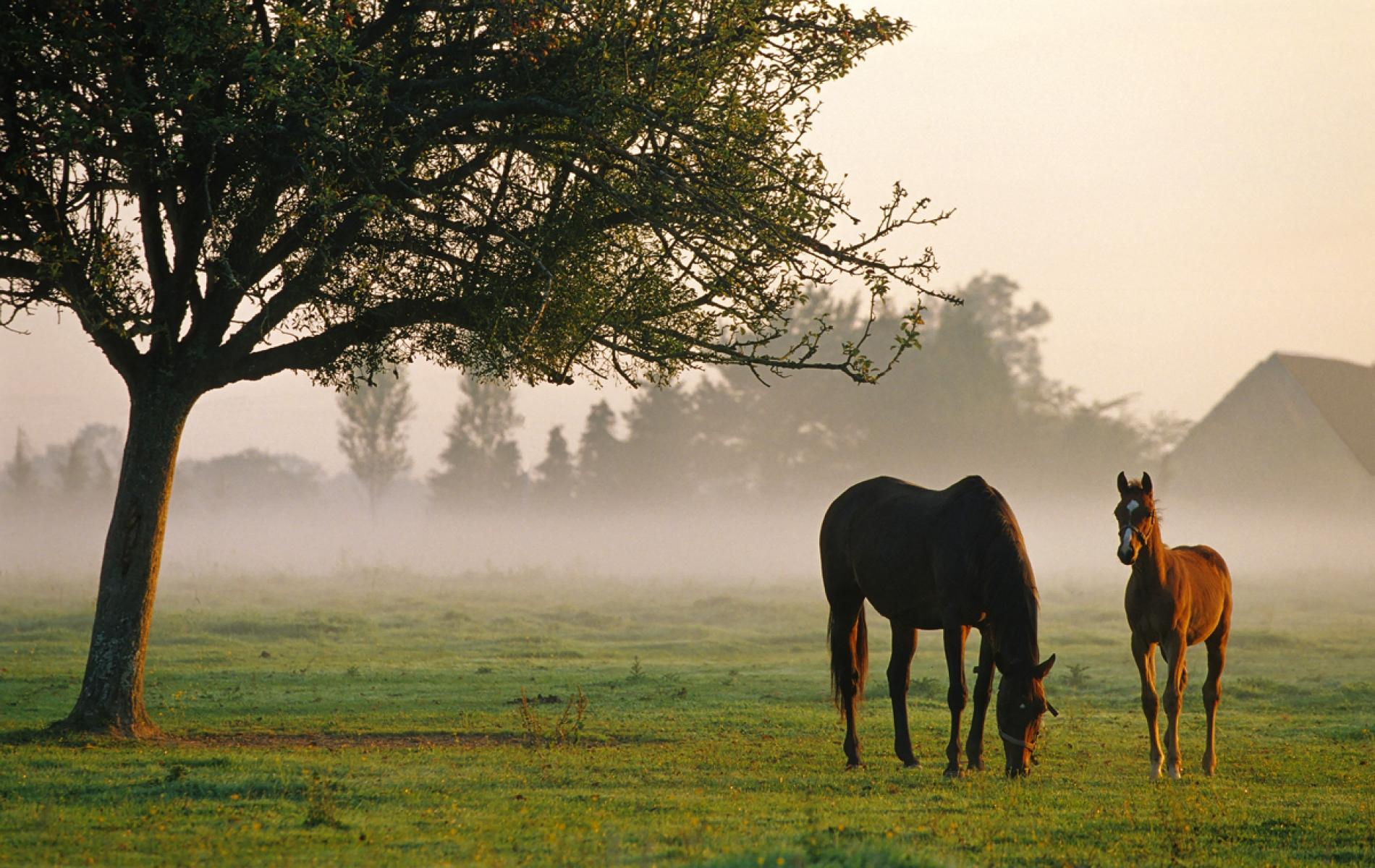 Domaine Equestre de Grangues