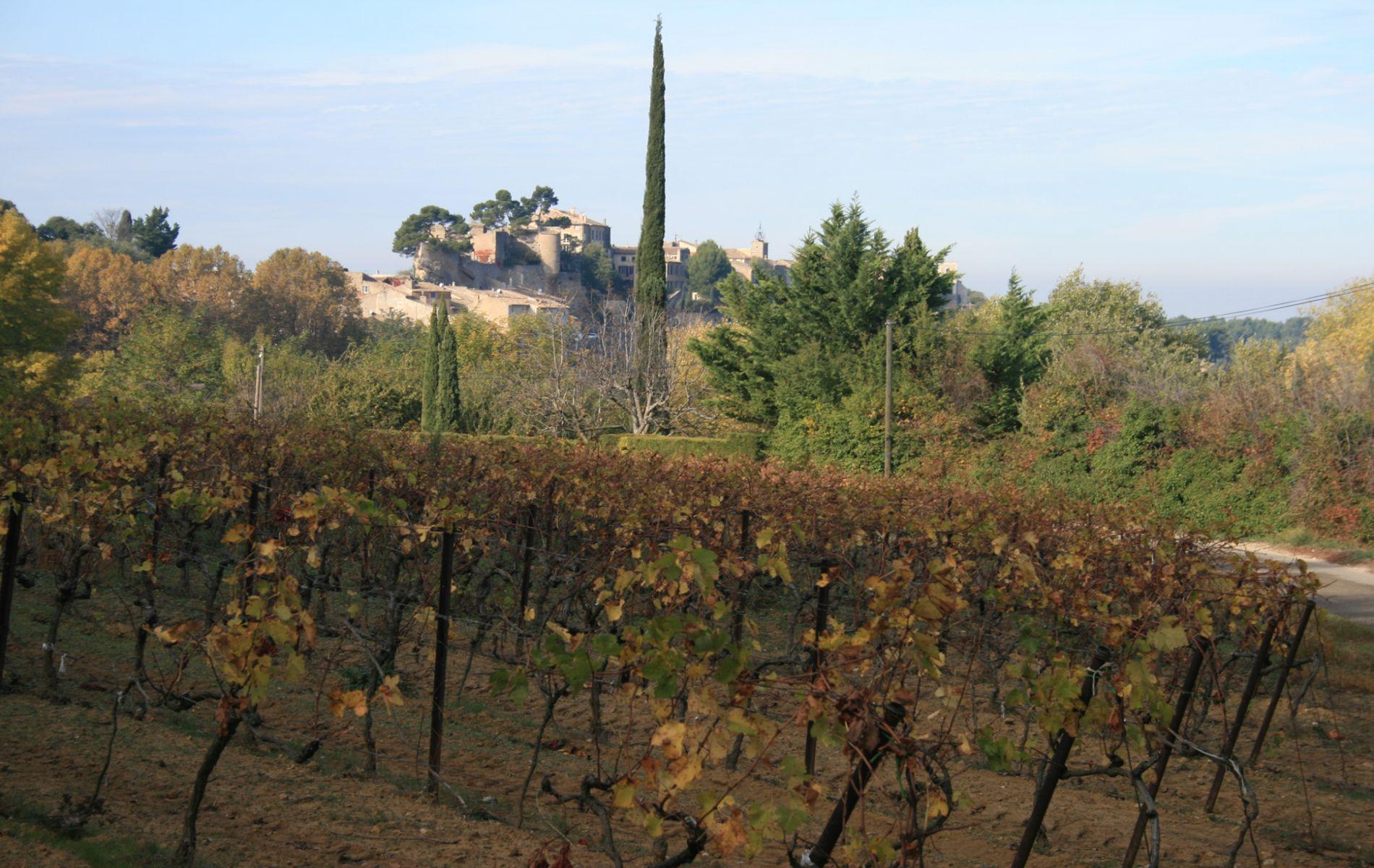 Promenade dans les vignes autour de Ménerbes