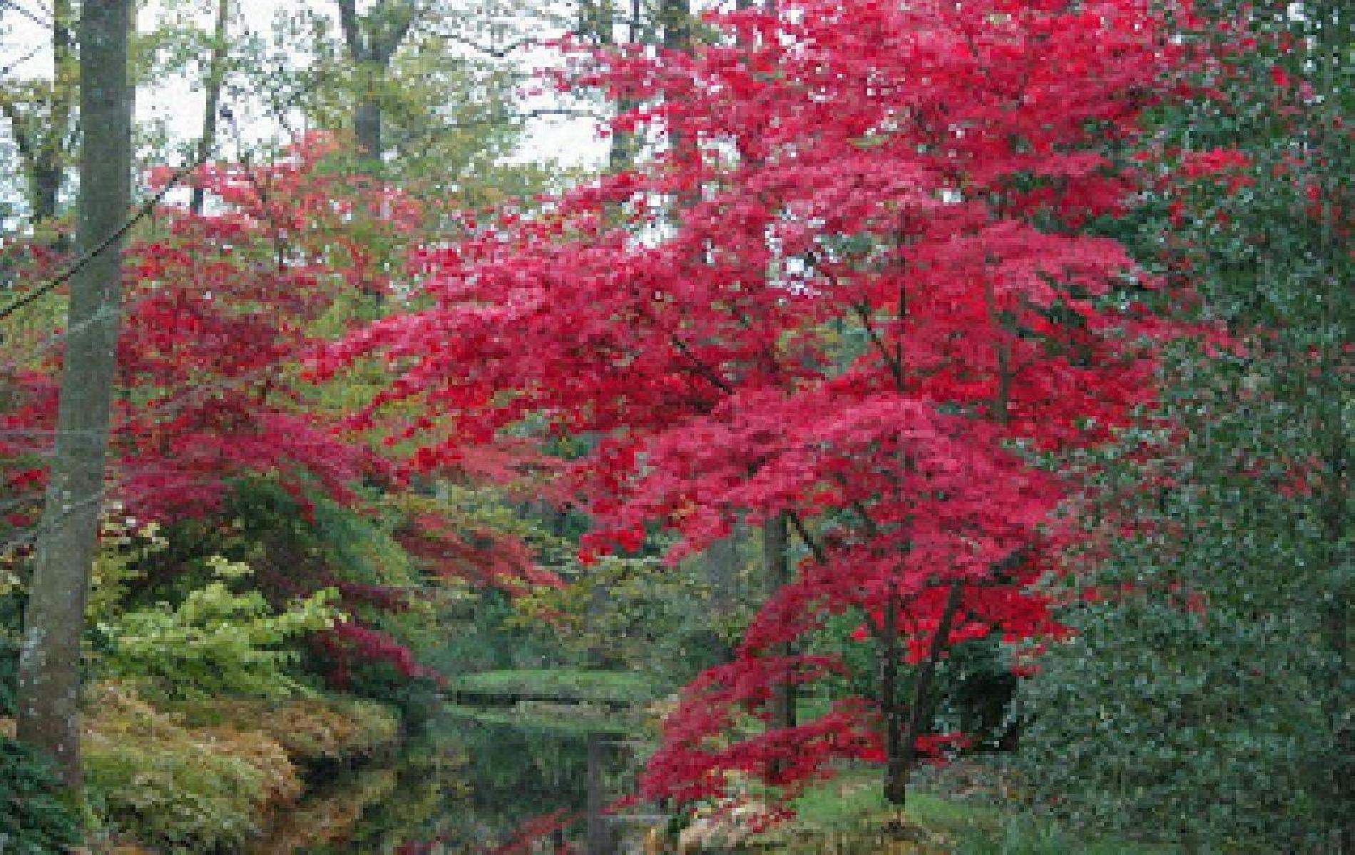 Arboretum des Prés de Culand à Meung-sur-Loire