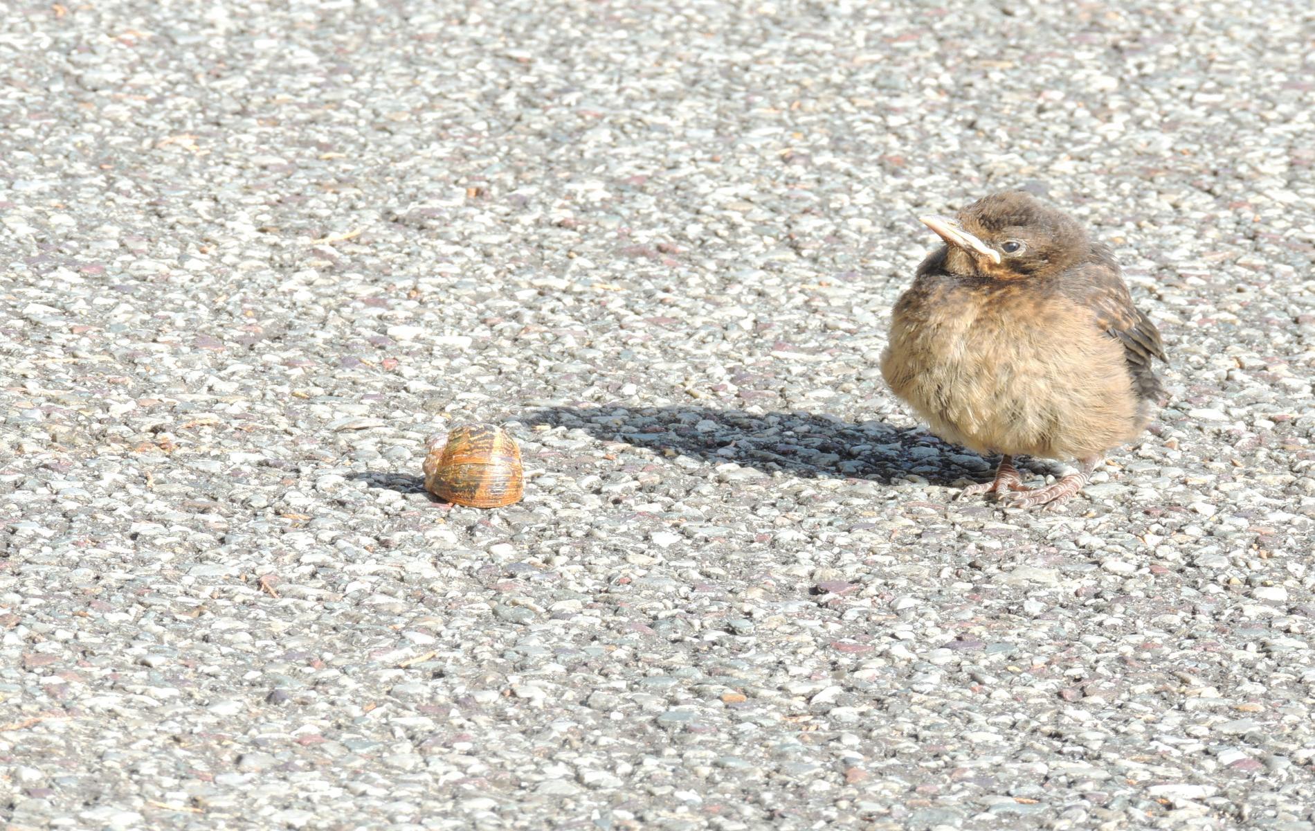 l'oiseau et l'escargot copains