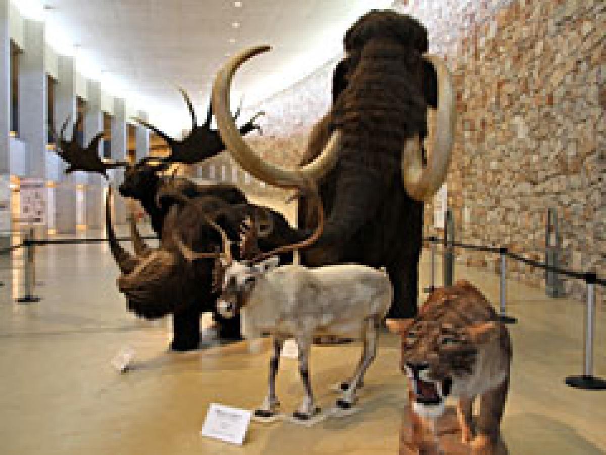 """Musée de la préhistoire de Quinson - <font color=""""#0000cc"""">A 30 km de l'hôtel le musée de la préhistoire est ouvert jusqu'à 18h00 et 19h00 en été. Fermeture hebdomadaire le mardi.</font> <font color=""""#000099""""></font>&nbsp;"""