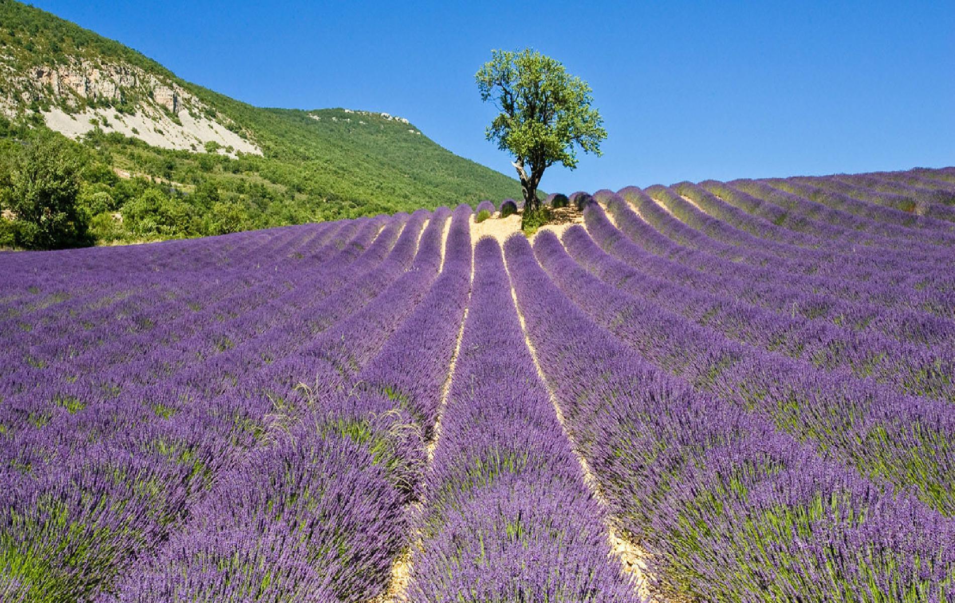 Drôme sud, Drôme provençale