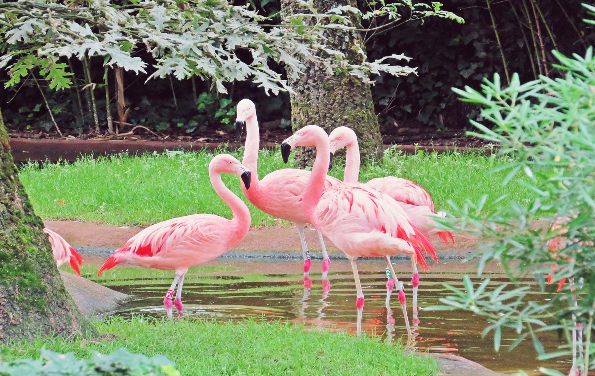 Tourisme la fl che pr s de l 39 h tel le vedaquais for Chambre zoo de la fleche