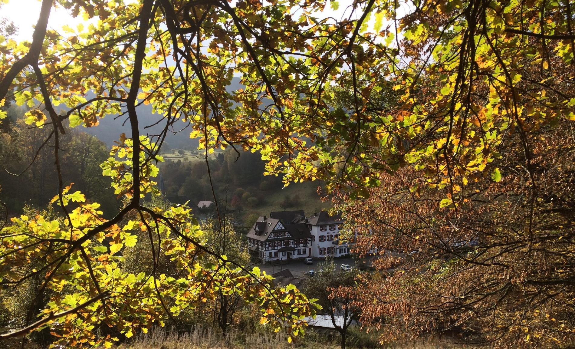 L'automne couleurs flamboyantes à Niedersteinbach