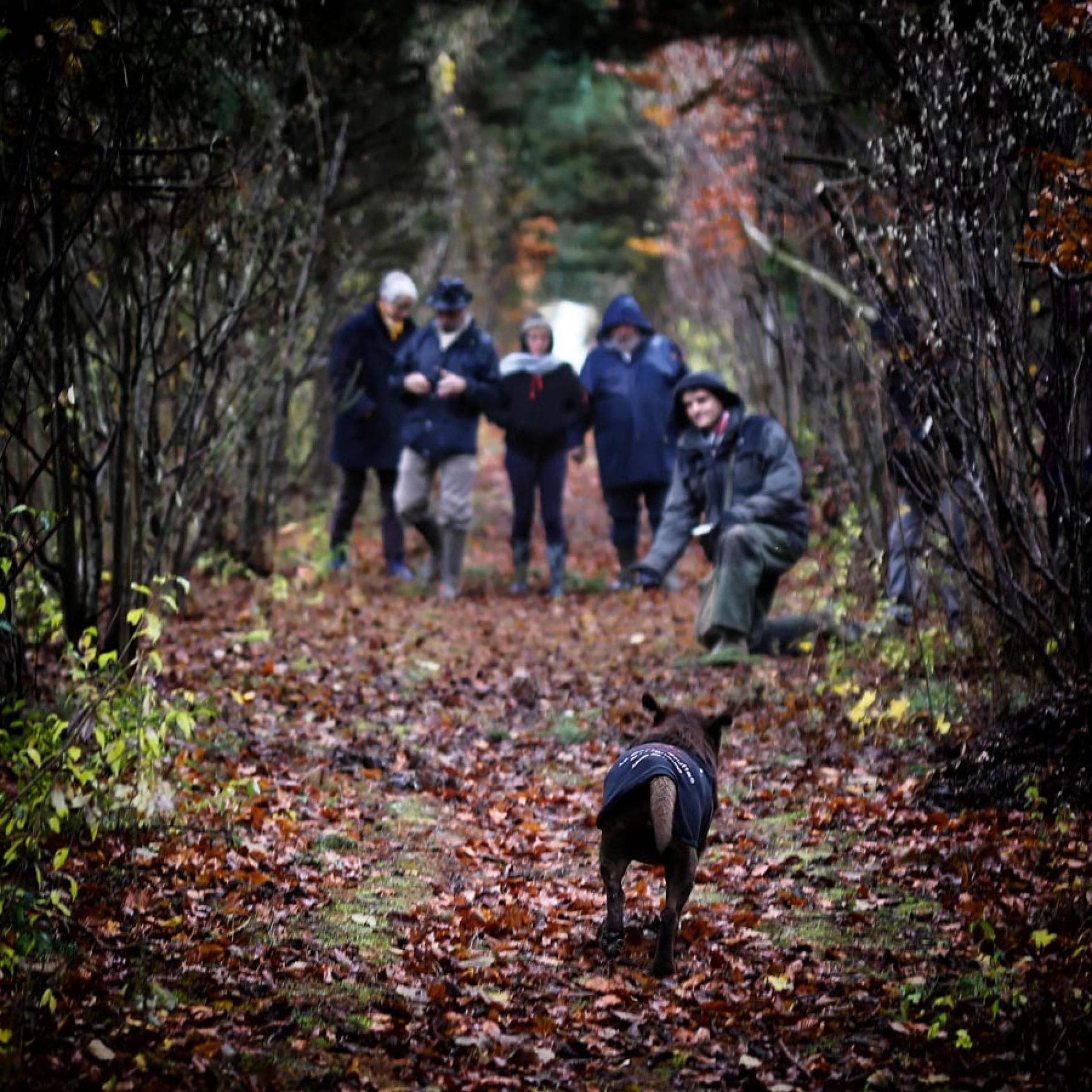 Search for the autumn truffle with our truffle dog