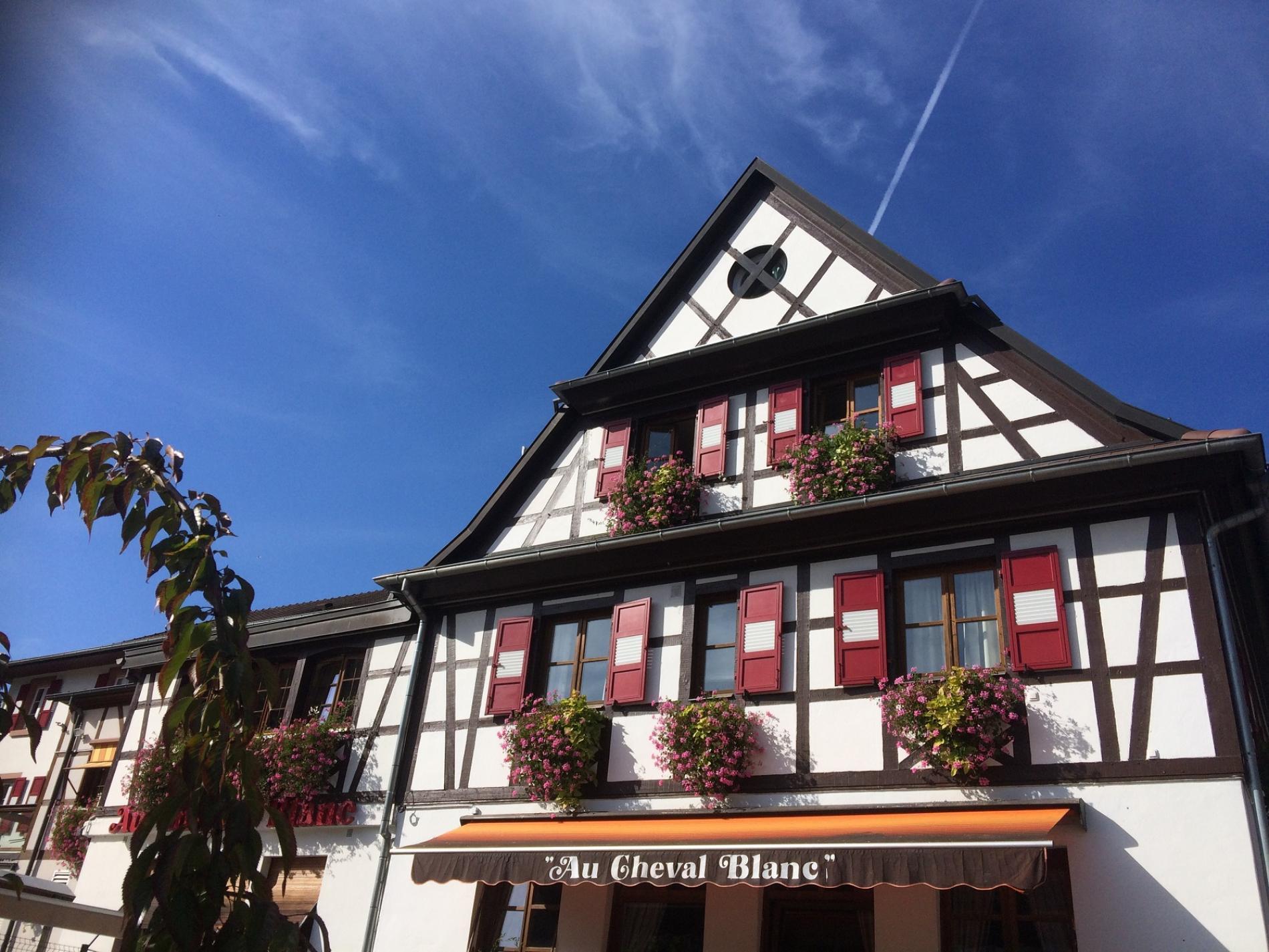 En Alsace à la découverte des champignons