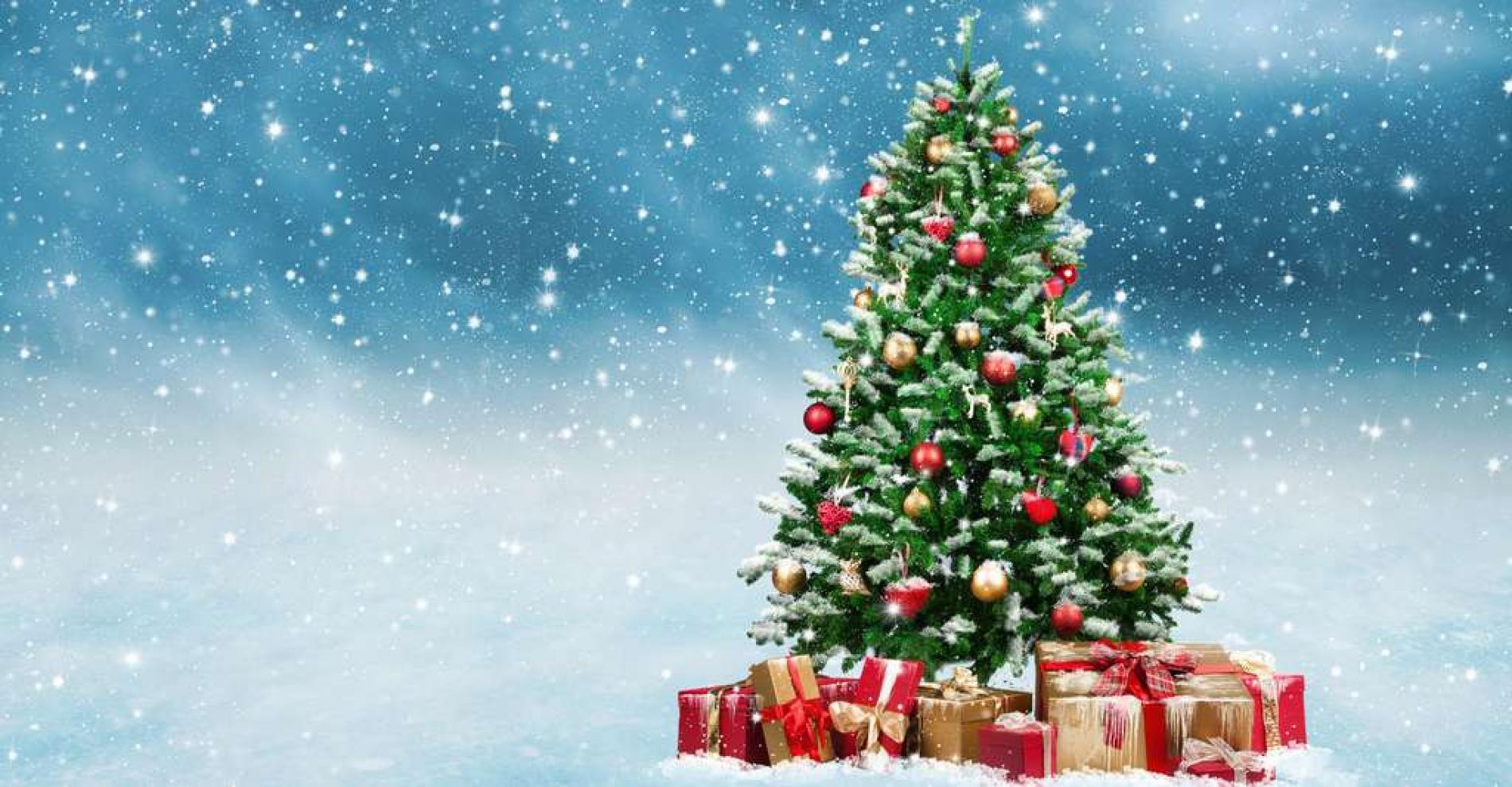 Noël aux Cygnes pour 2 personnes (nuit du 24 décembre)
