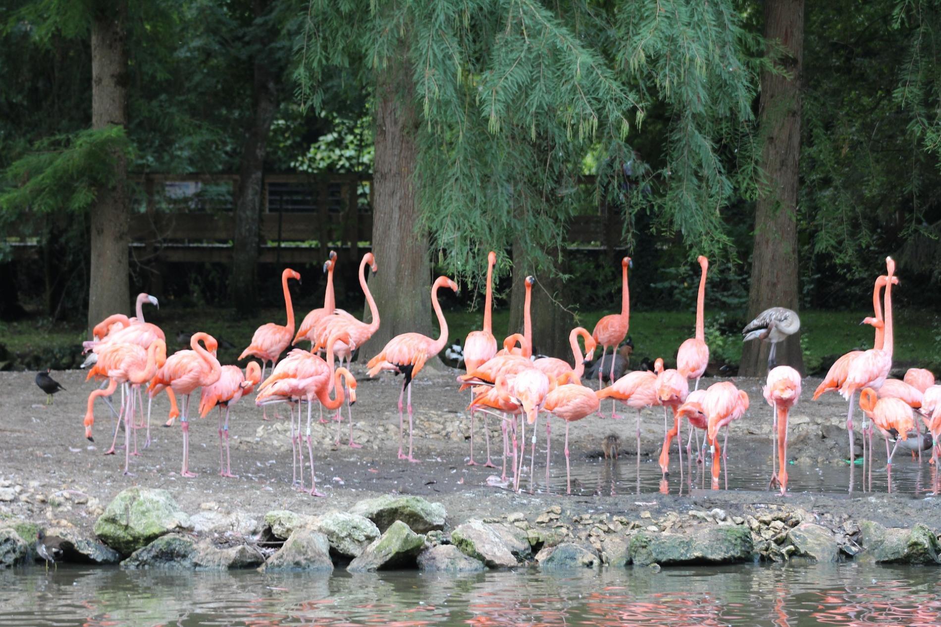 Le ZooParc de Beauval 20 km
