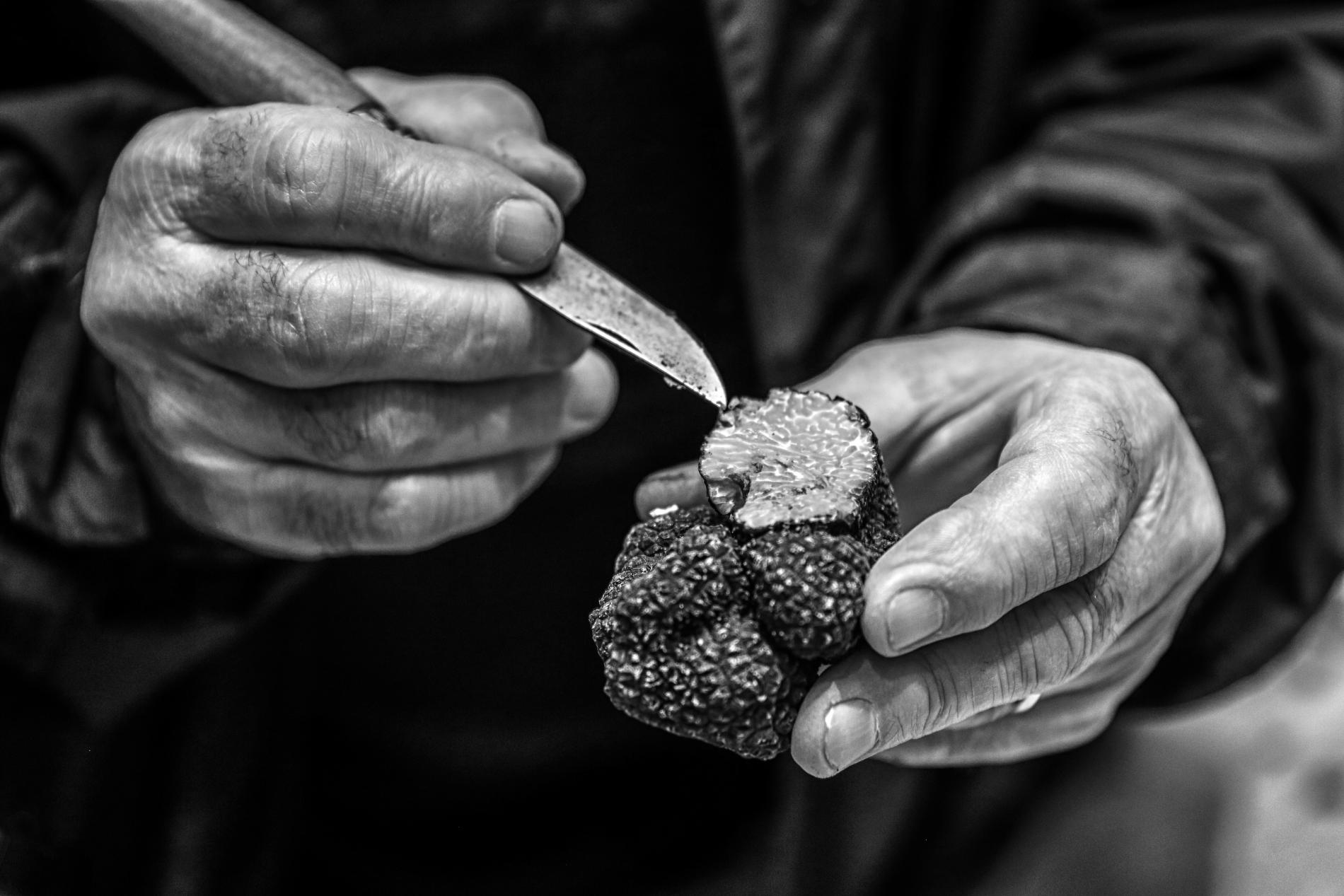 Black truffle of Perigord
