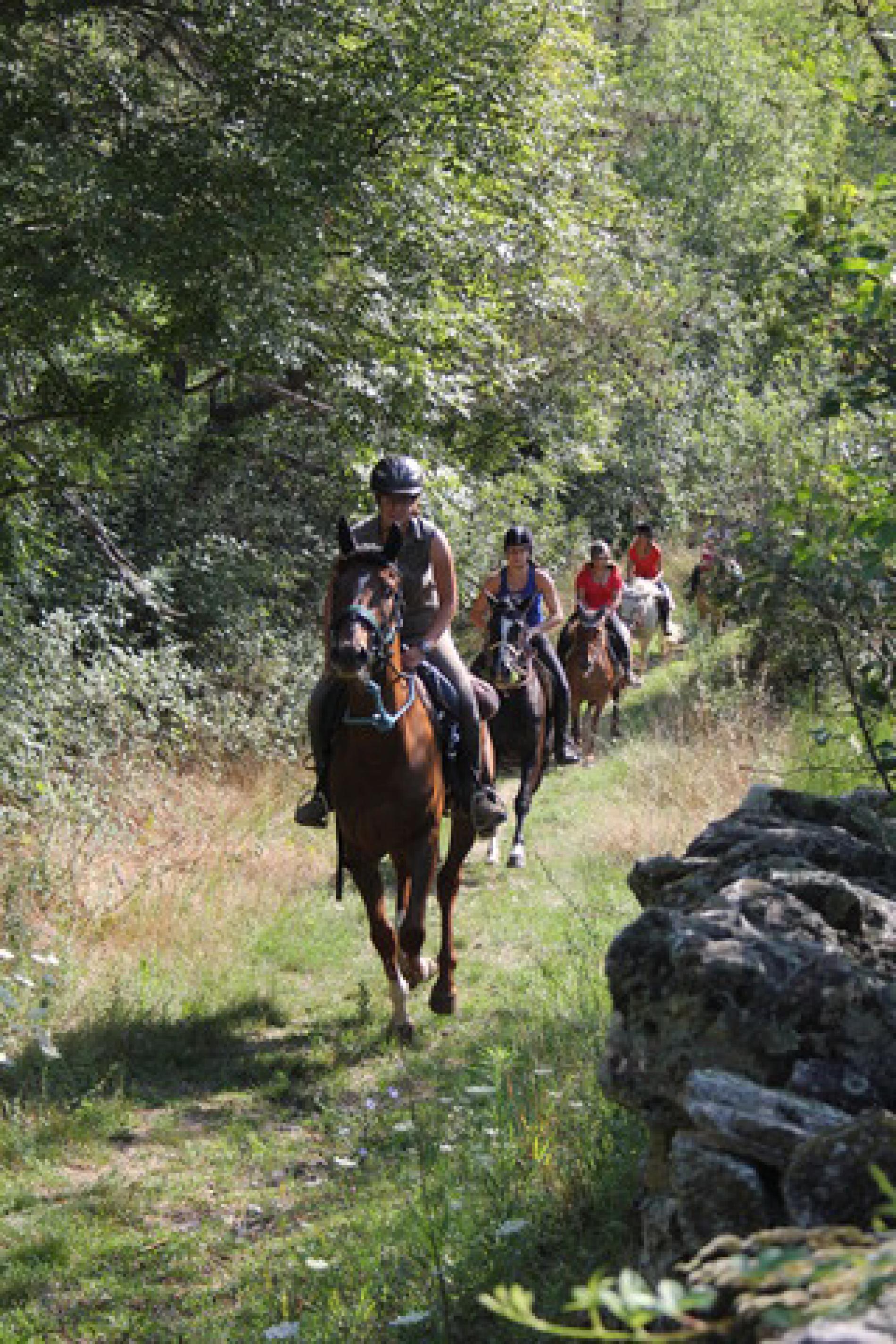 Ballades et cours de cheval : Centre équestre Les Lauzières