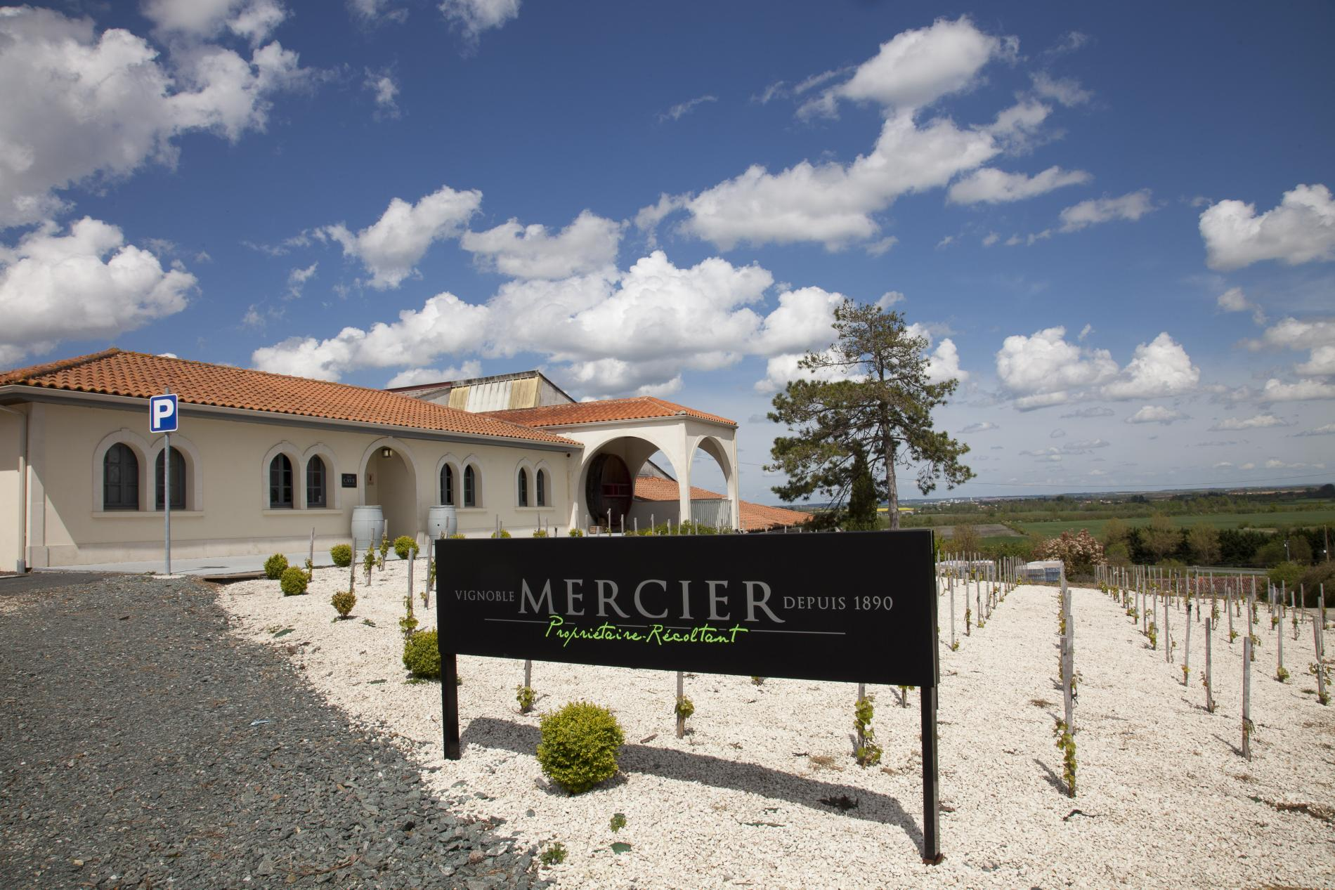 Mercier Vineyard
