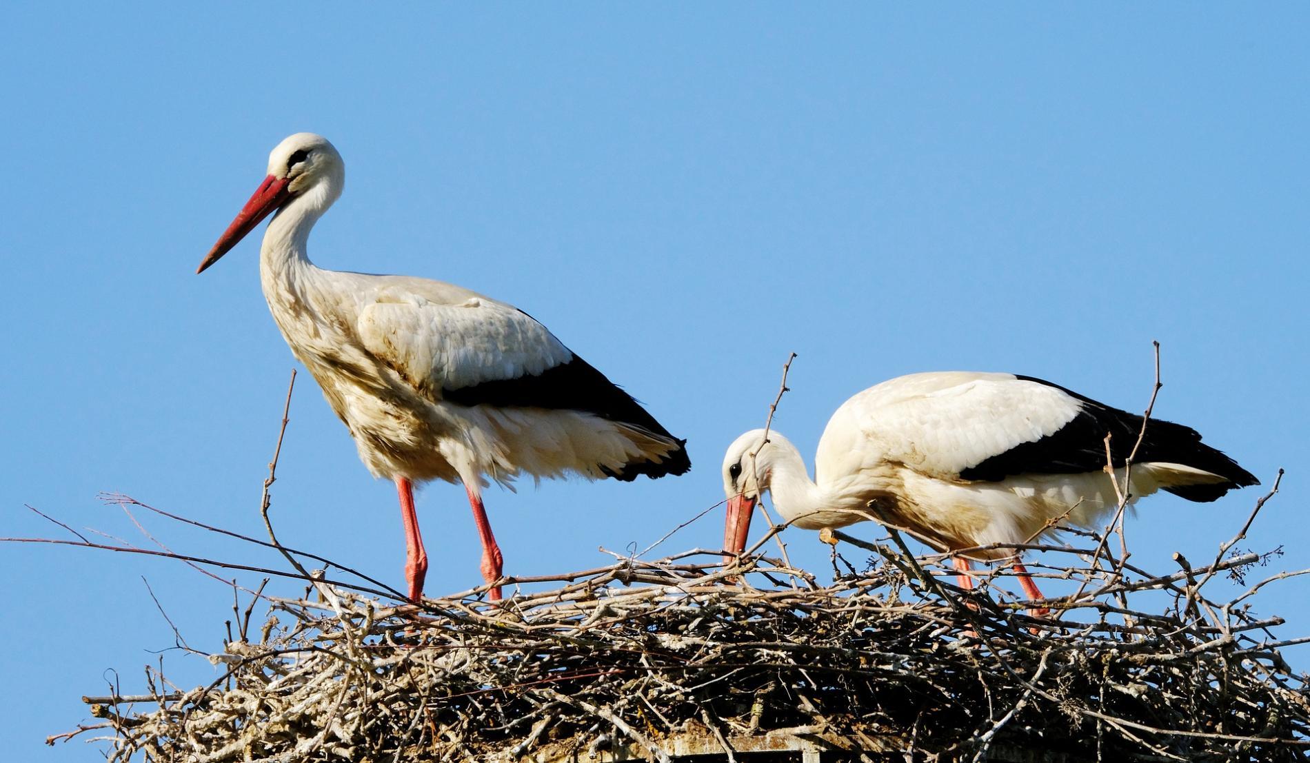 Naturoparc Stork and Otter Park