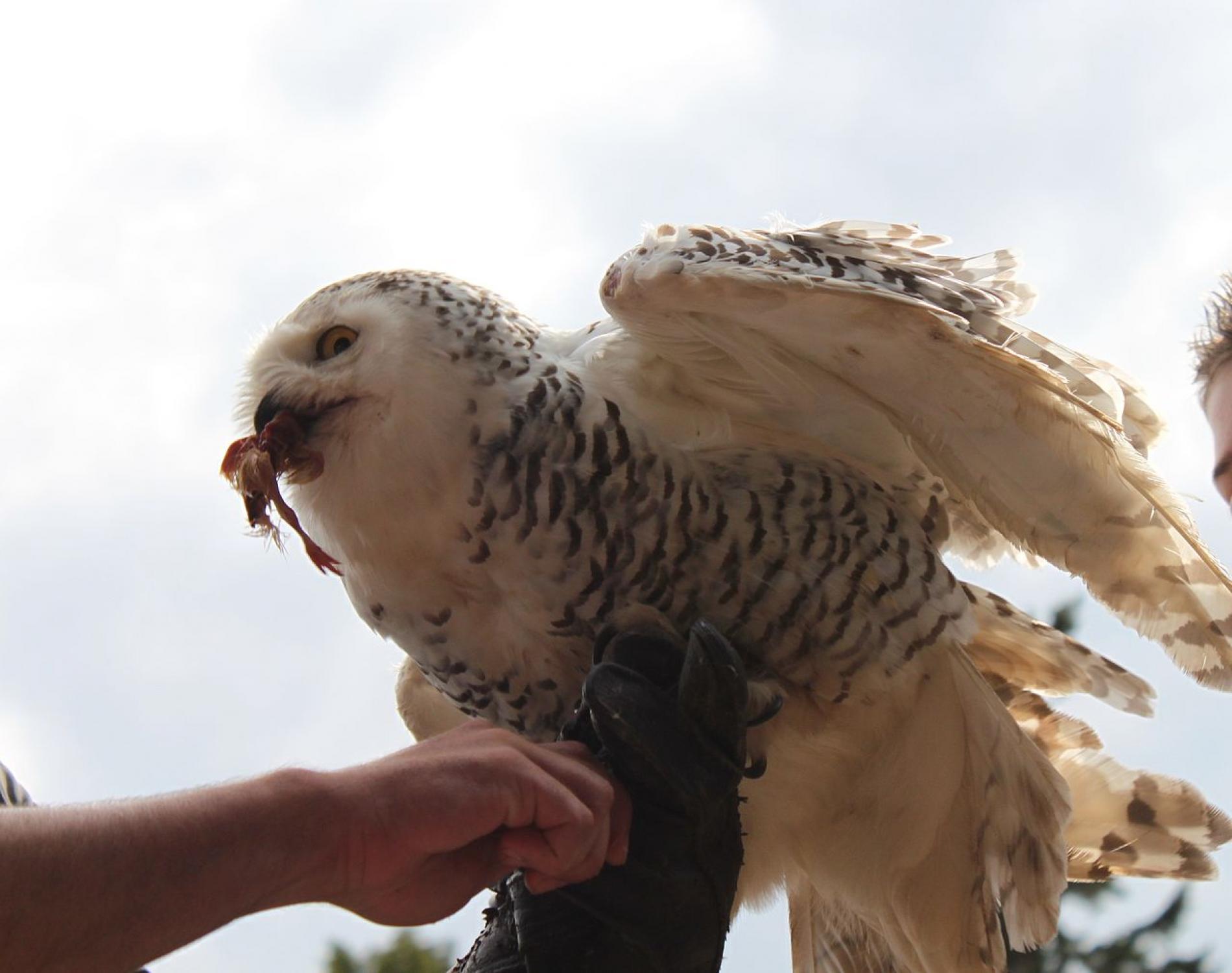 Volerie des Aigles (Adlerhorst)