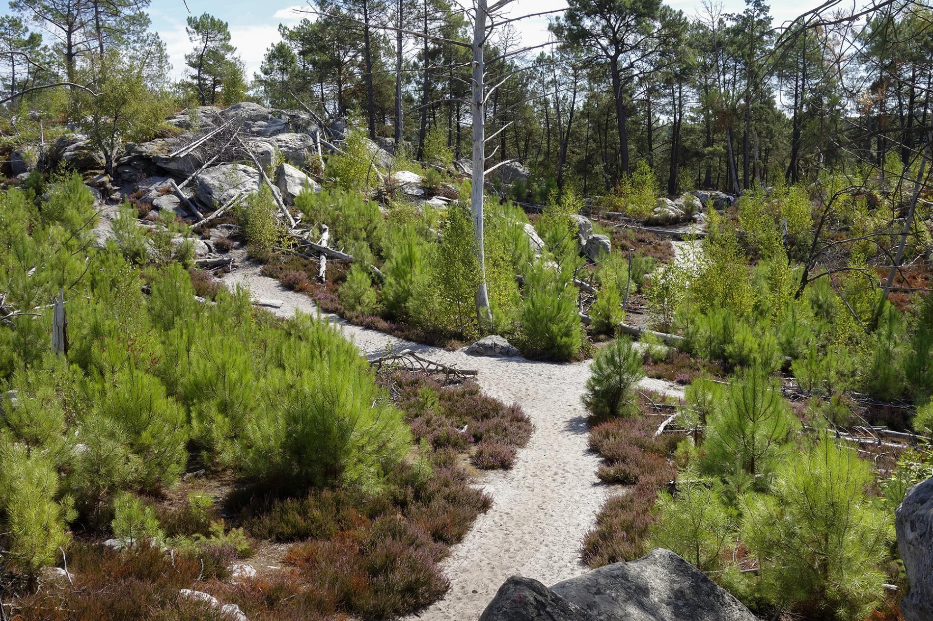 25 Moguls Hike Circuit