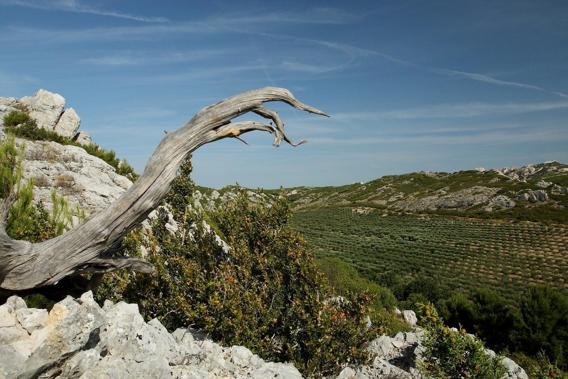 La Provence  - Les Alpilles - Le Vallon Du Renard
