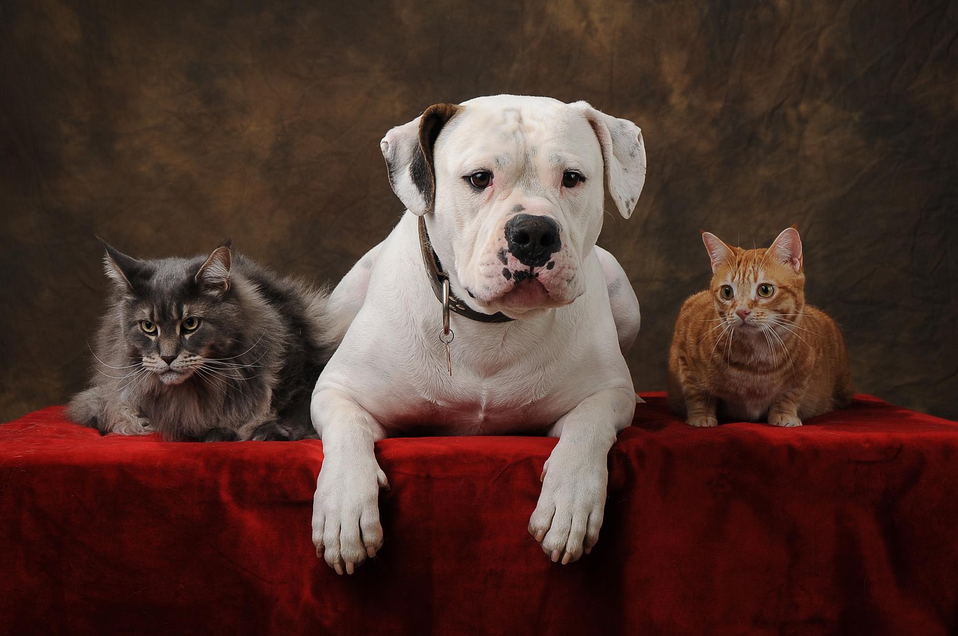 Animaux domestiques acceptés (avec supplément)