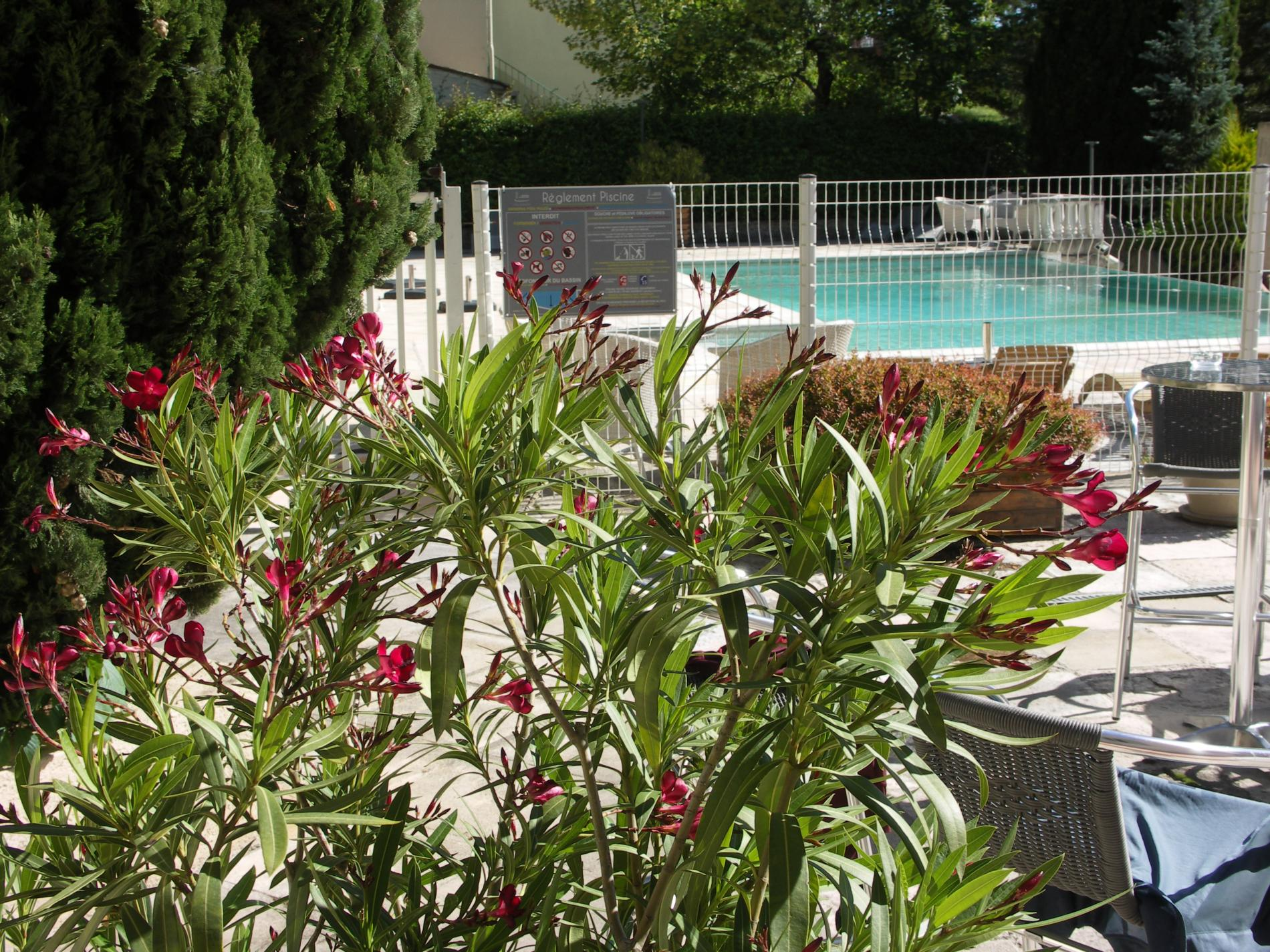 Abords piscine et règlement
