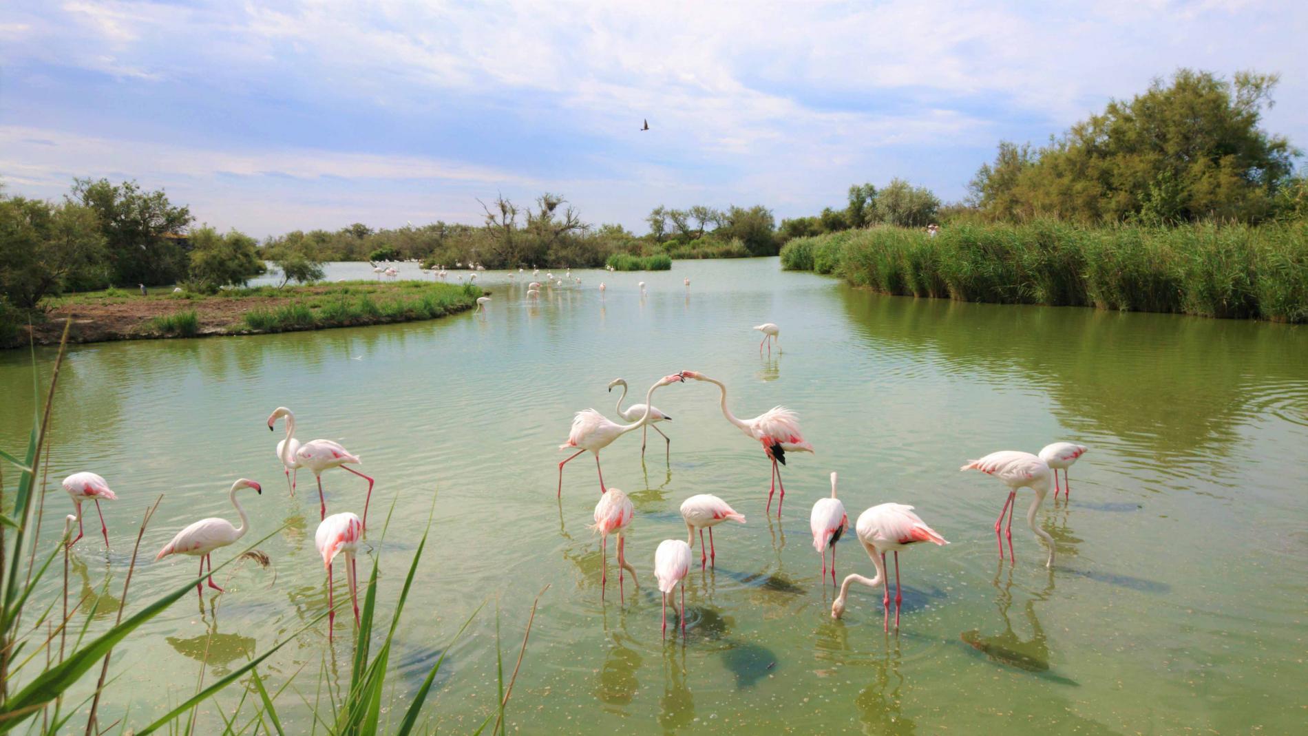 Tourisme en Camargue : nature, tradition et sport