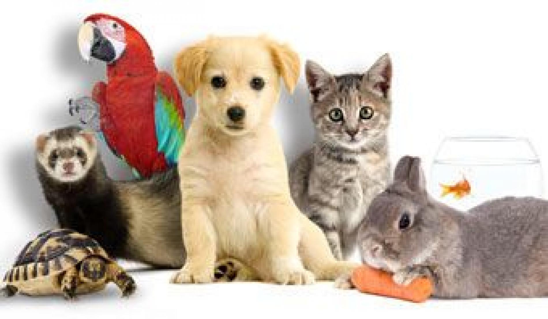 Nos amis les animaux sont acceptés