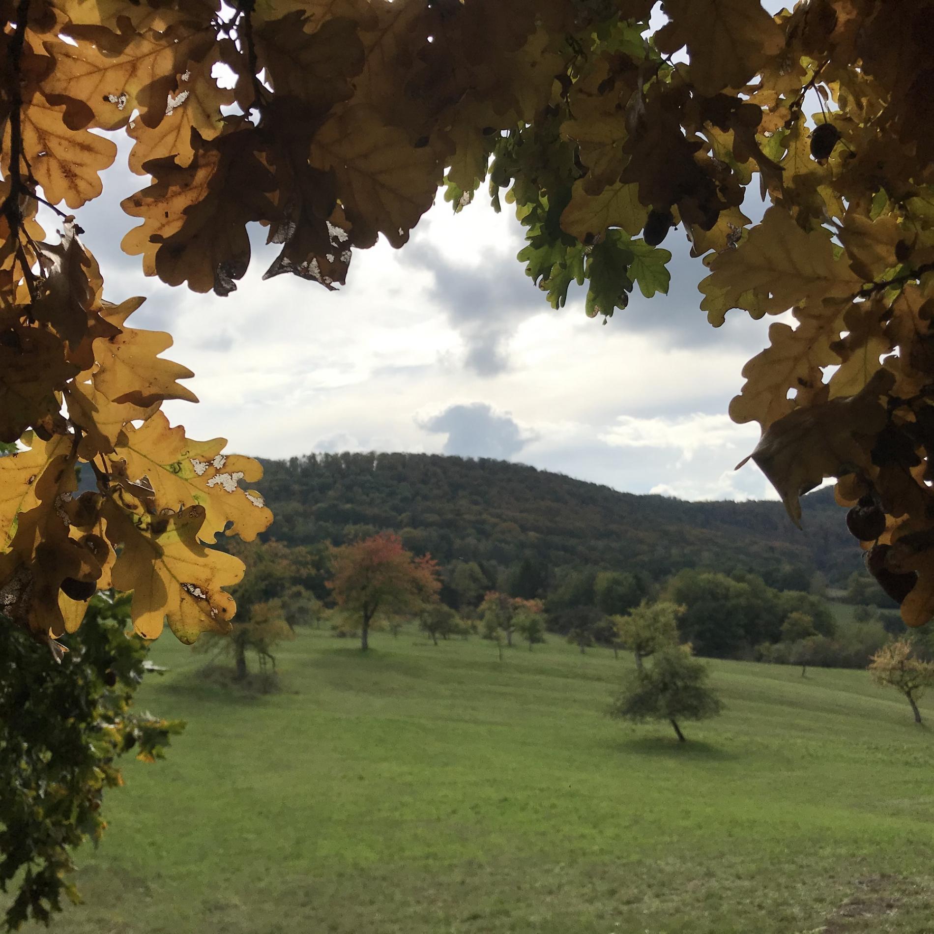 une belle arrière saison pour découvrir la richesse du parc naturel des Vosges du Nord
